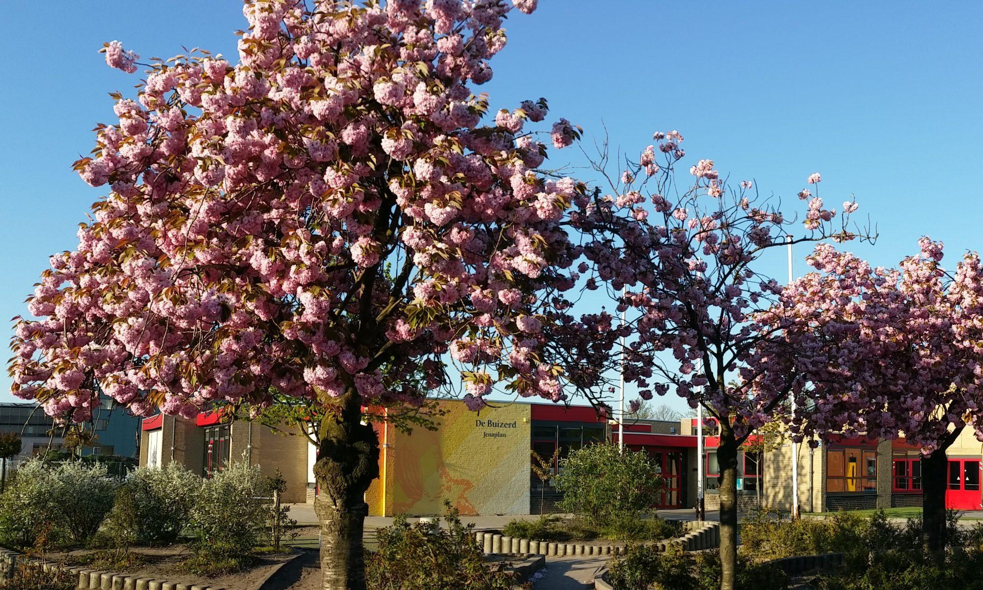De Buizerd - Openbare Jenaplanschool - Wijchen